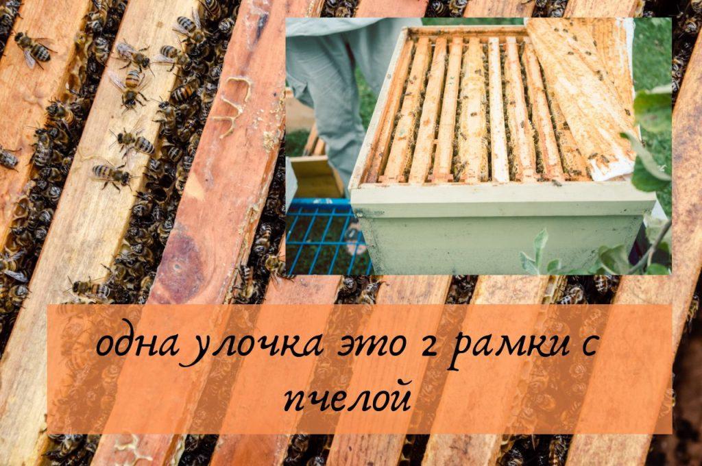 Зимовка слабых пчелосемей